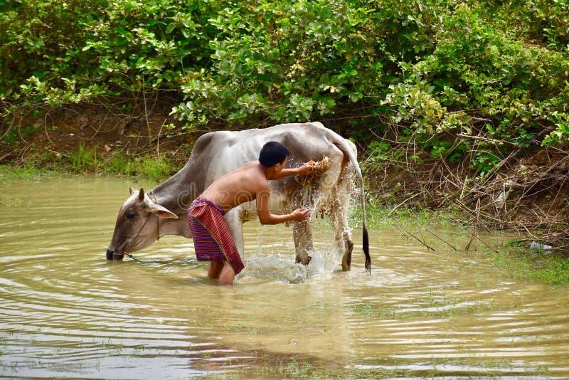 Villageois s'inquiétant de sa vache photo libre de droits