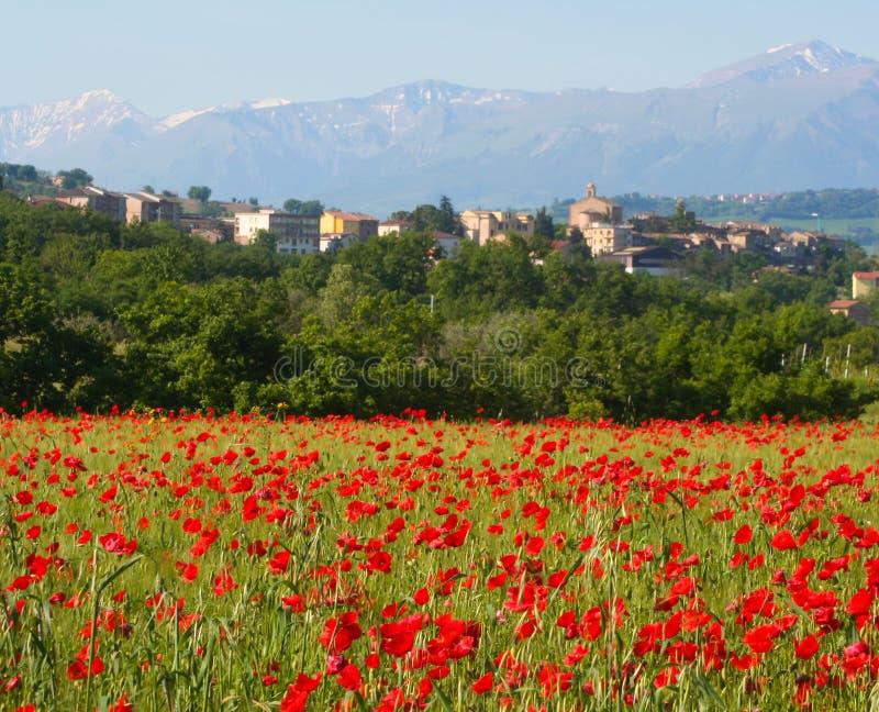 Villaggio del papavero, Italia centrale immagini stock libere da diritti