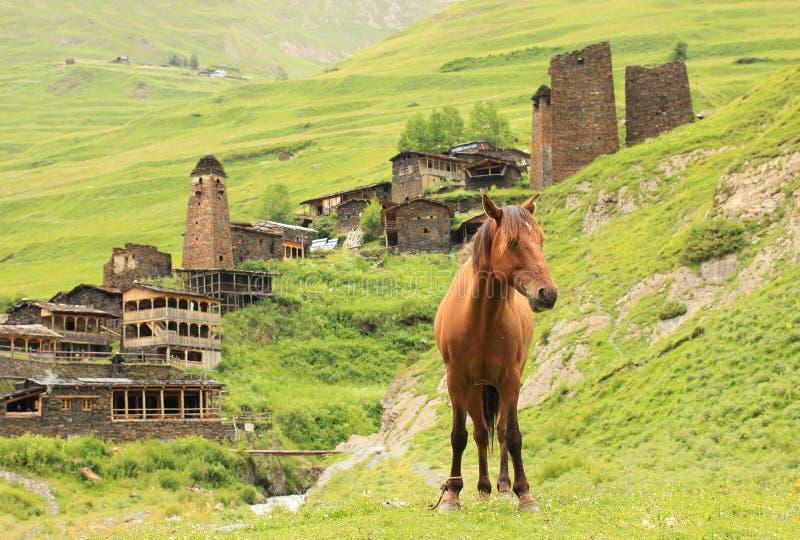 Villaggio di Dartlo Regione di Tusheti (Georgia) immagini stock libere da diritti