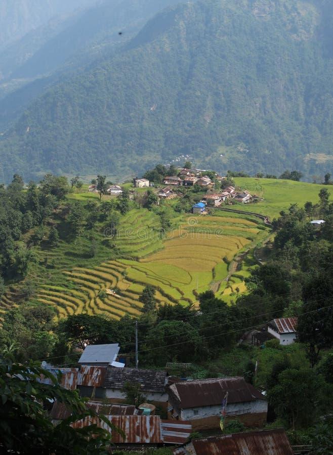 Villaggio di Gurung su una sommità e sulle risaie fotografia stock libera da diritti