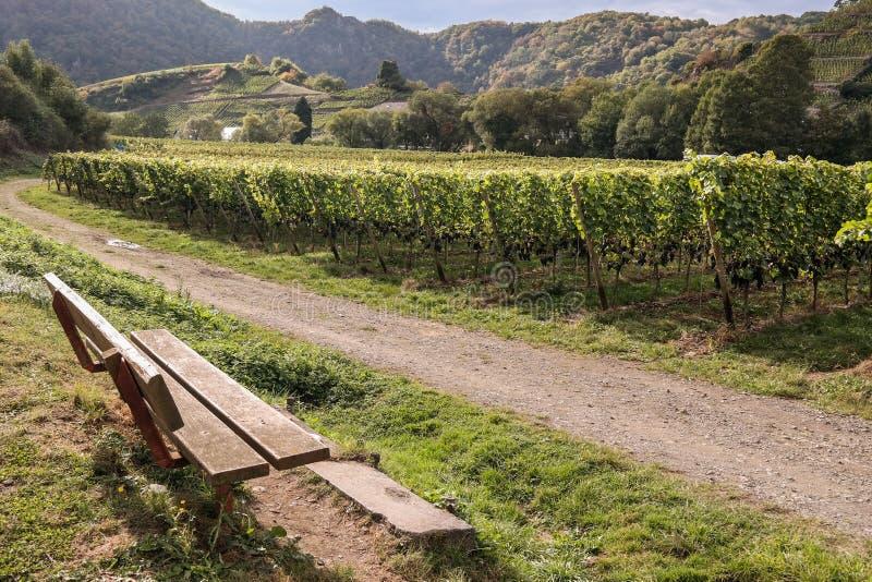 Villaggio di Mayschoss in valle di Ahr, Germania immagine stock libera da diritti