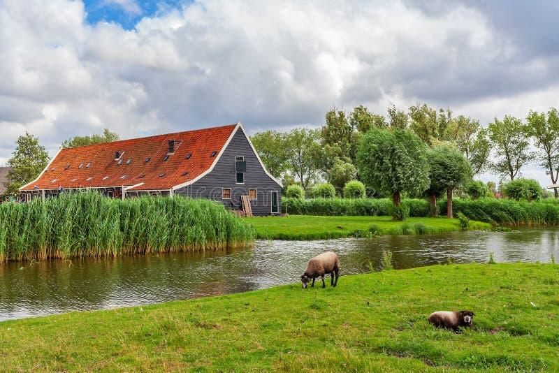 Villaggio di Zaanse Schans, Paesi Bassi fotografia stock libera da diritti