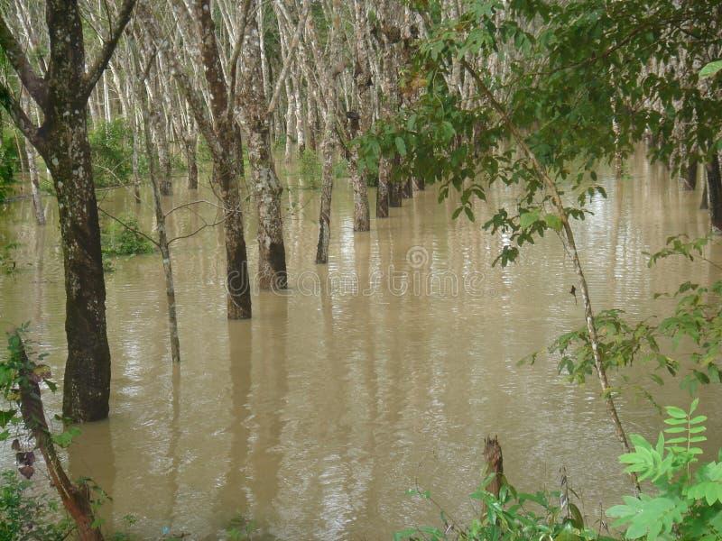 Villaggio sommerso acqua nel distretto di Nakhon Si Thammarat immagine stock libera da diritti