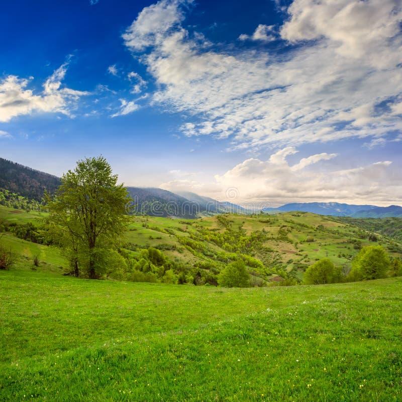 Villaggio sul prato del pendio di collina in montagna ad alba immagini stock libere da diritti