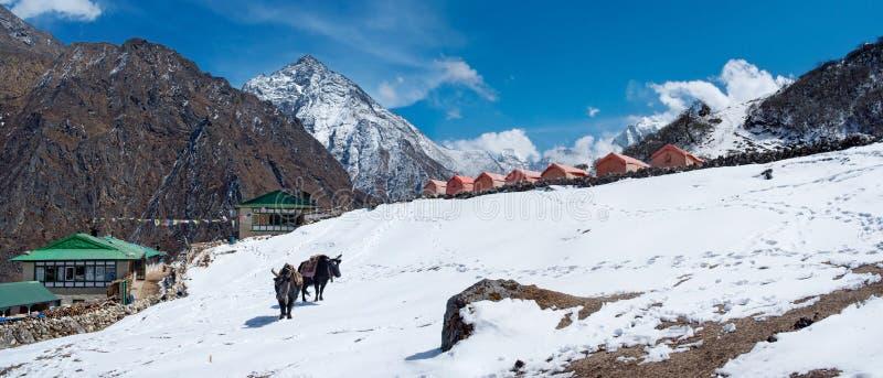 Villaggio in valle di Gokyo in Himalaya, Nepal fotografie stock libere da diritti