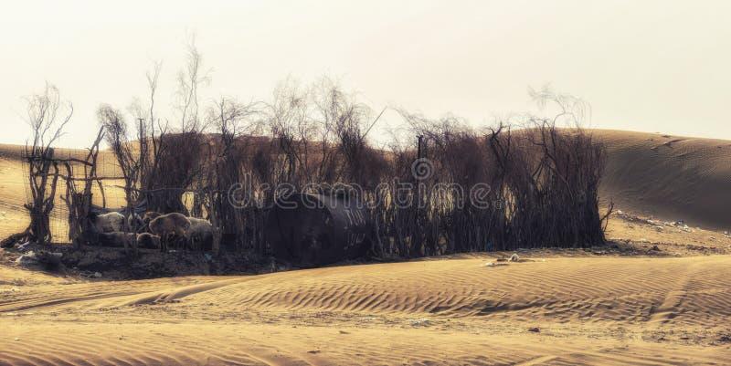 Villaggio, vicino a Darvaza, deserto di Karakum, il Turkmenistan immagine stock libera da diritti