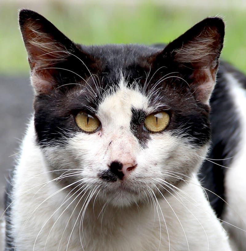 Wild Cat Face stock photos