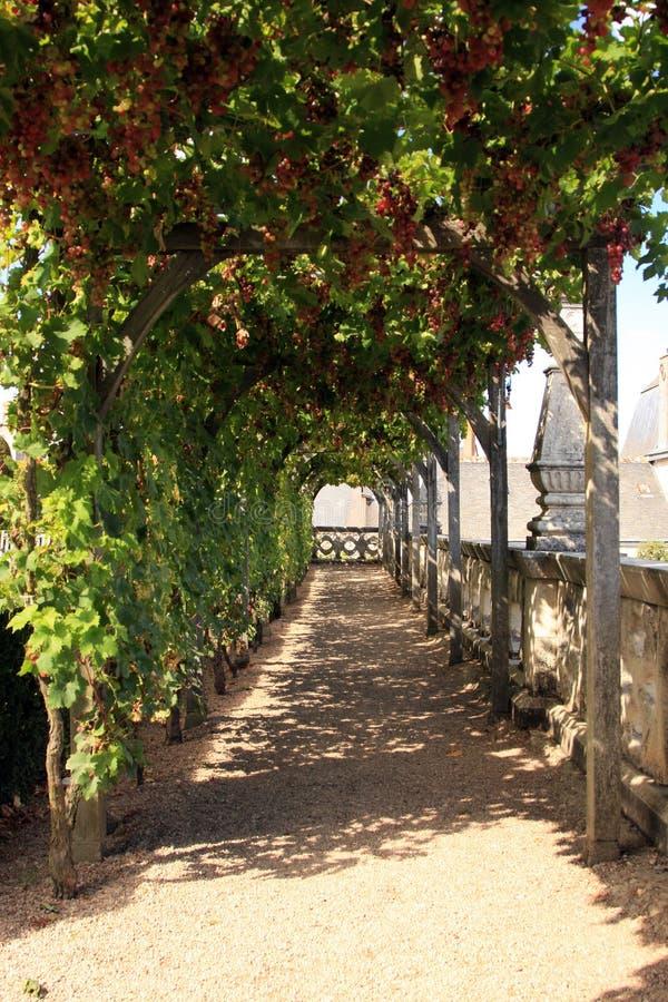 Download Villandry Castle Gardens stock image. Image of travel - 27596715