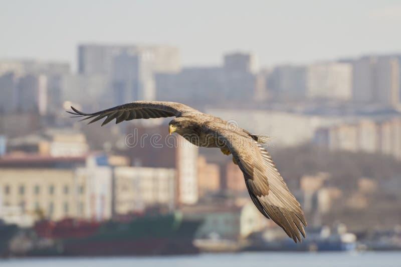 ville d'ower de Mer-Eagle photo libre de droits
