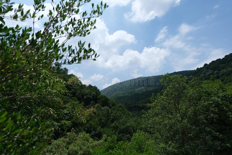 Ville Forest Of Yalova - Turquie image libre de droits
