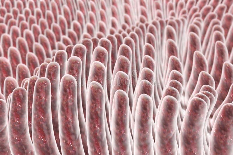 Villi dell'intestino tenue illustrazione vettoriale