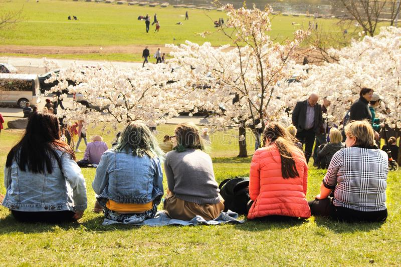 Vilnius, Lithuania - 04 22 2019: Young women sitting on green lawn enjoying blooming sakura trees at Sugihara park royalty free stock image