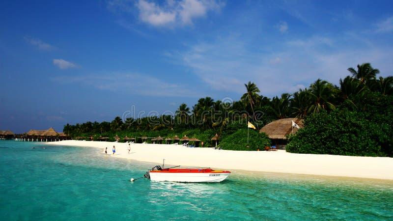 Vilureef ö i Maldiverna royaltyfria foton