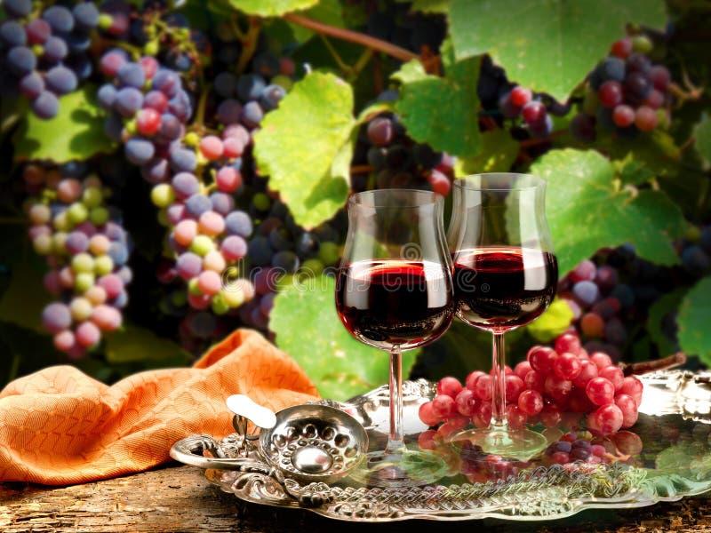 Vin royaltyfri bild