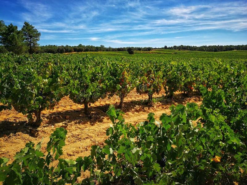 Vin, del duero de Ribera photos libres de droits