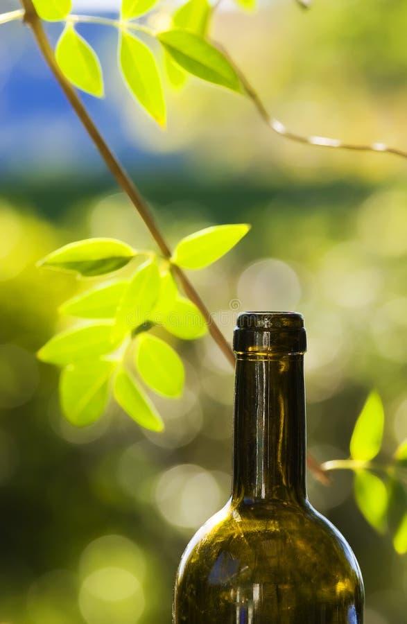 Vin et vigne photo libre de droits