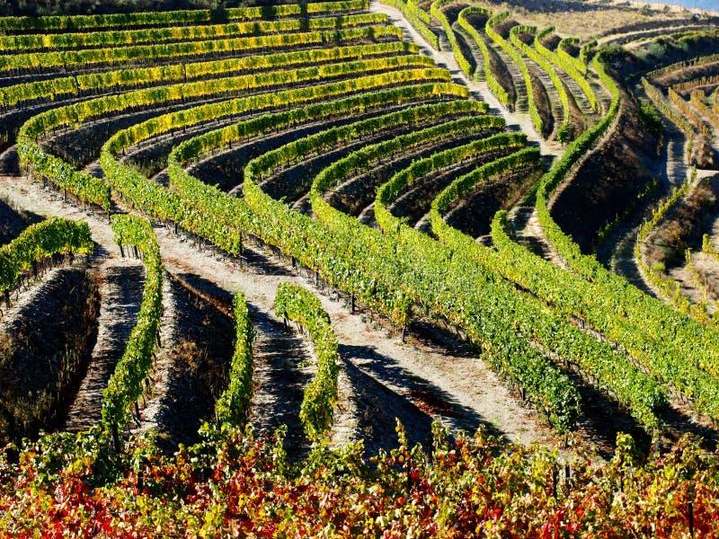 Vin gauche Portugal de vignobles de rivière de Douro photo libre de droits