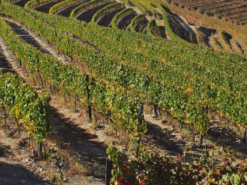 Vin gauche Portugal de vignobles de rivière de Douro image stock