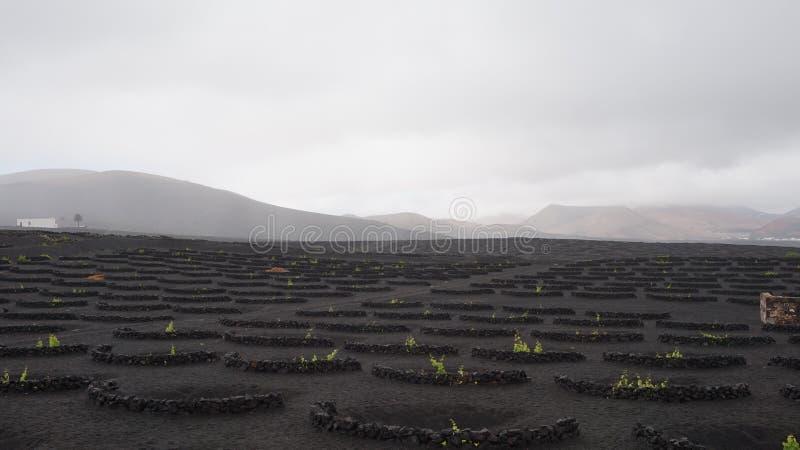 Vin noir de roche photo stock