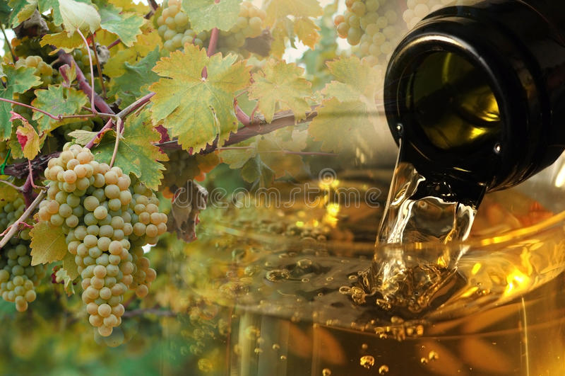Vin och vinrankabakgrund arkivfoton