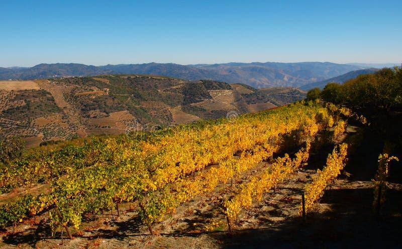 Vin Portugal de Porto de vignobles de rivière de Douro photos libres de droits