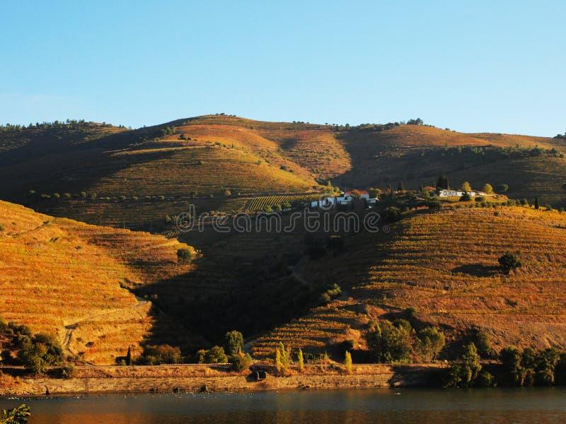Vin Portugal de Porto de vignobles de rivière de Douro photo stock