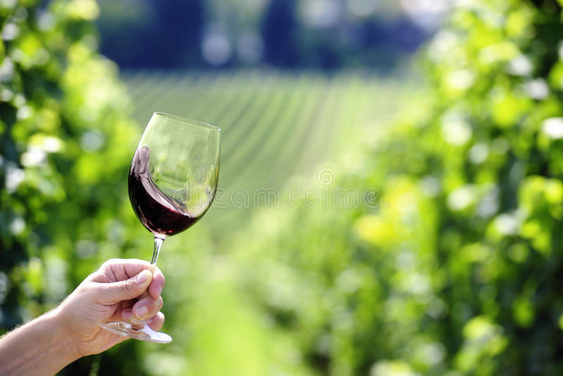 Vin rouge pivotant dans un verre image stock