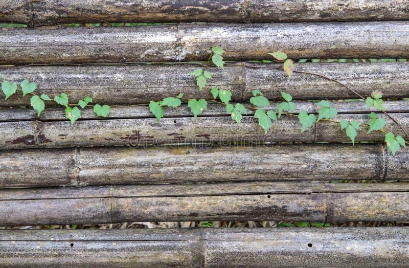 Vin sur l'ancien mur de bambou. images stock