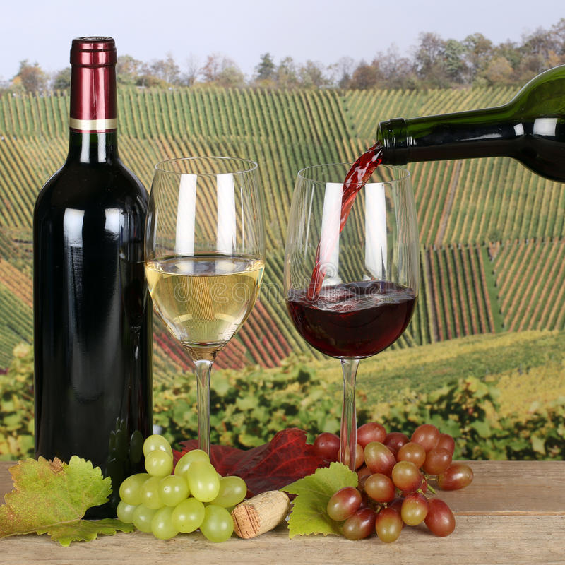 Vin versant dans le verre dans les vignobles photo libre de droits