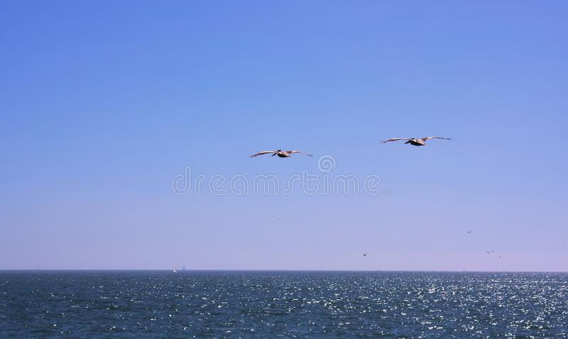 Vina del Mar - παραλία - Χιλή - ΙΙΙ - στοκ εικόνες