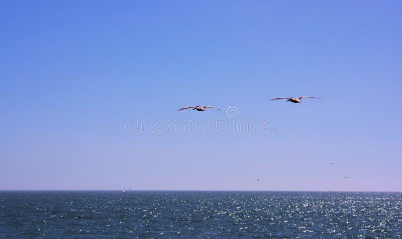 Vina del Mar - bord de la mer - le Chili - III - photo stock