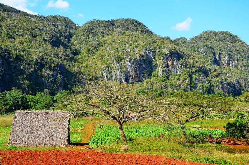 Vinales国家公园,古巴 库存图片