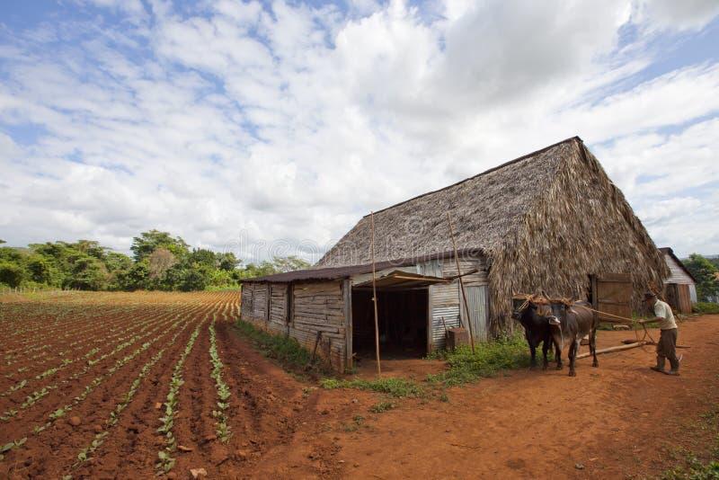 vinales Кубы стоковое фото