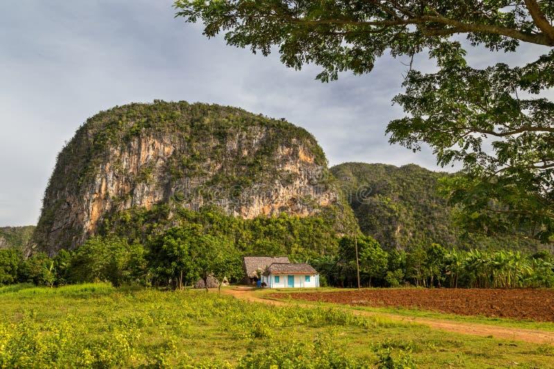 Vinales, Cuba stock images