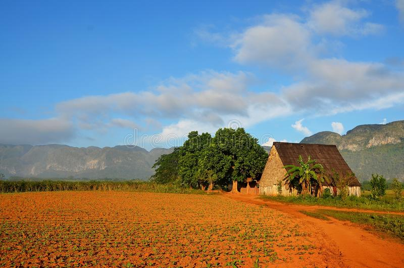 Vinales national park and its typical tobacco house, Cuba stock photography