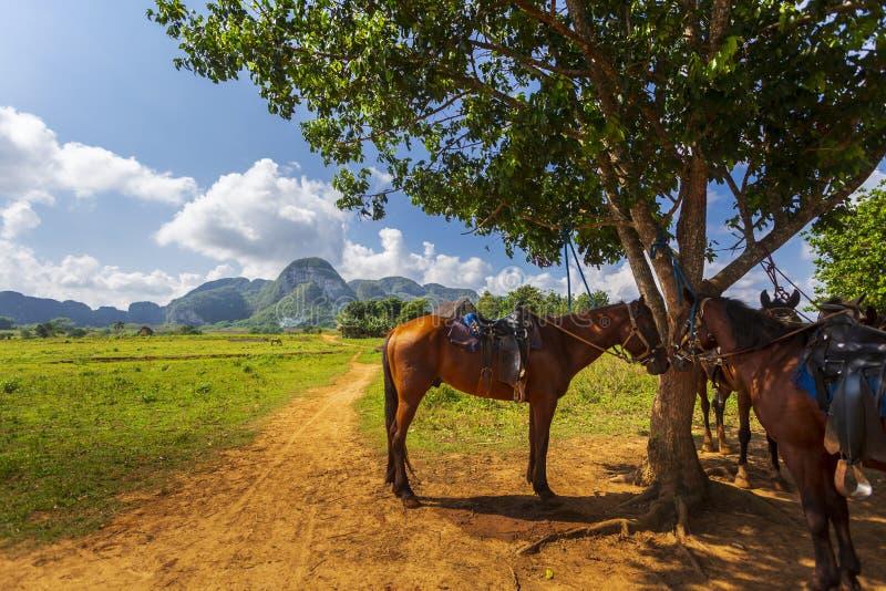 Vinales park narodowy, UNESCO, pinar del rio prowincja zdjęcia stock