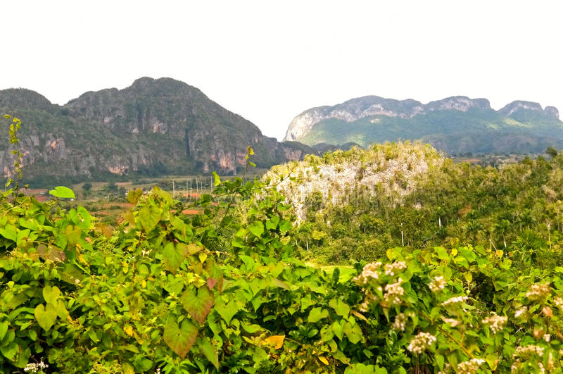Vinales valley royalty free stock images