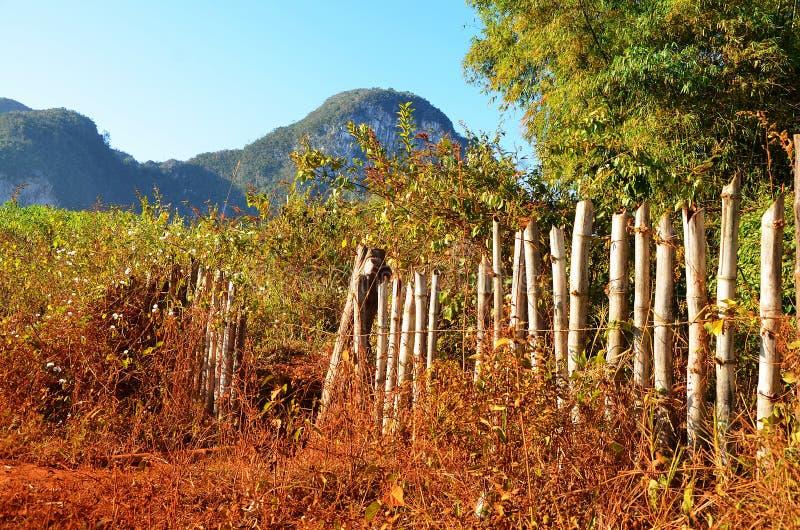 Vinalesvallei in de ochtend, Cuba royalty-vrije stock foto