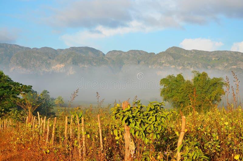 Vinalesvallei in de ochtendmist, Cuba royalty-vrije stock fotografie