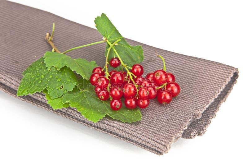 Download Vinbär fotografering för bildbyråer. Bild av frukt, bär - 19775955