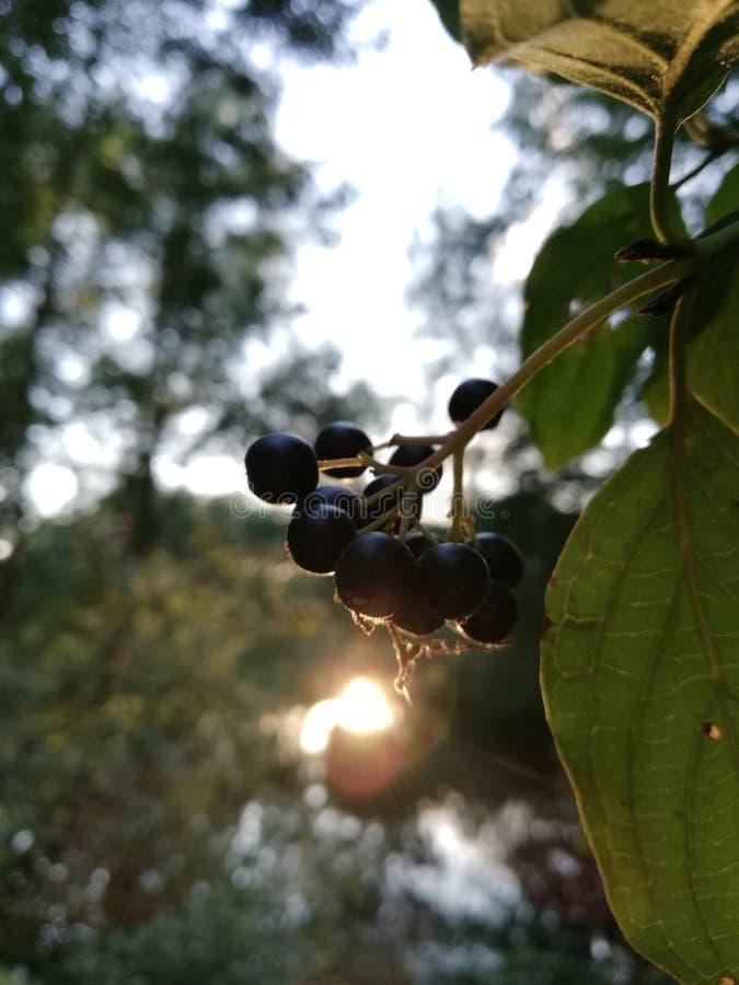 Vinbär i parkera St Pierre i Amiens arkivbilder