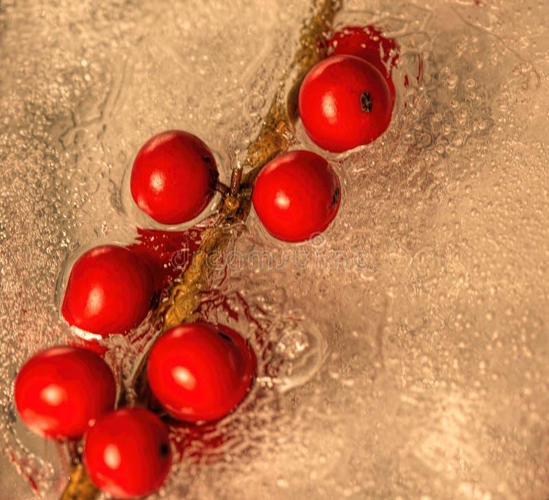 Vinbär inbäddade i is royaltyfria bilder
