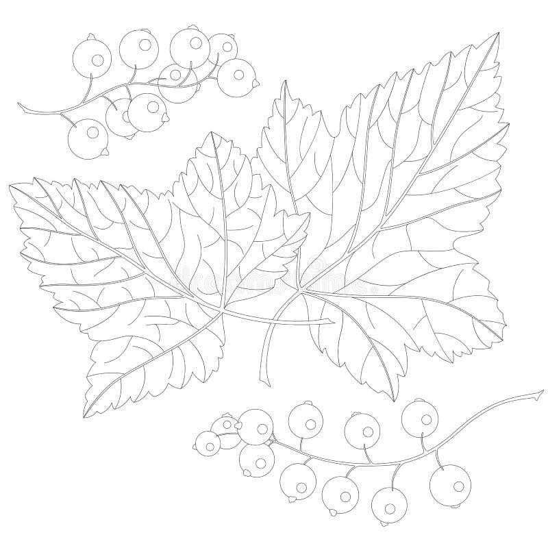Vinbär och sidor royaltyfri illustrationer