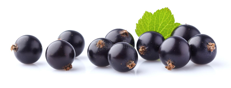Vinbärbär med bladet arkivfoto