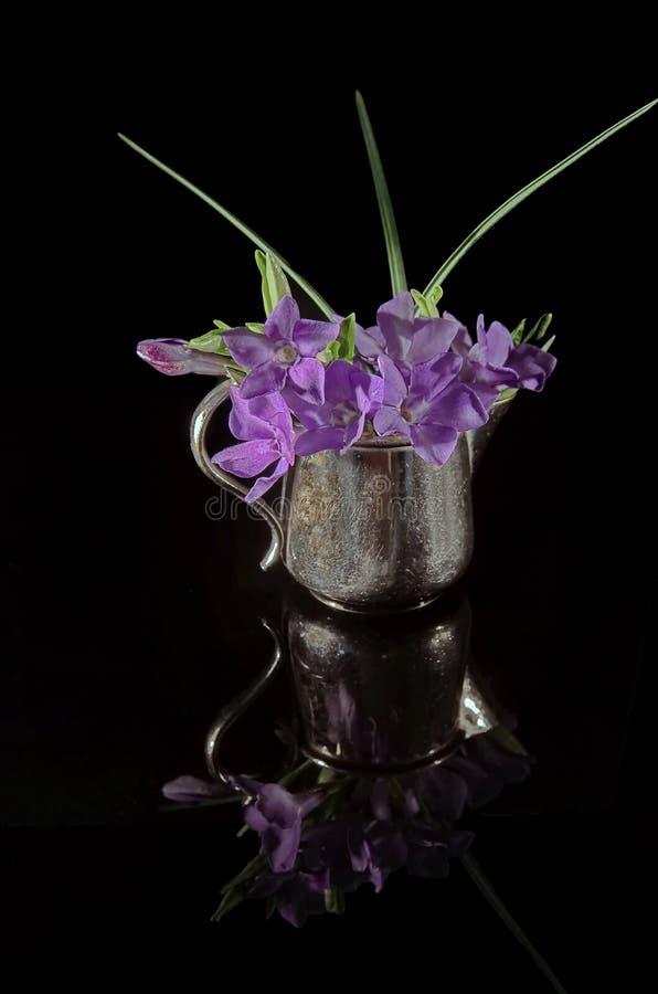 Vinca minor in vase. On a mirroring black background. Photo taken on: April 18. 2015 stock images