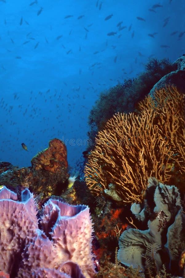 vincent珊瑚礁的st 免版税图库摄影