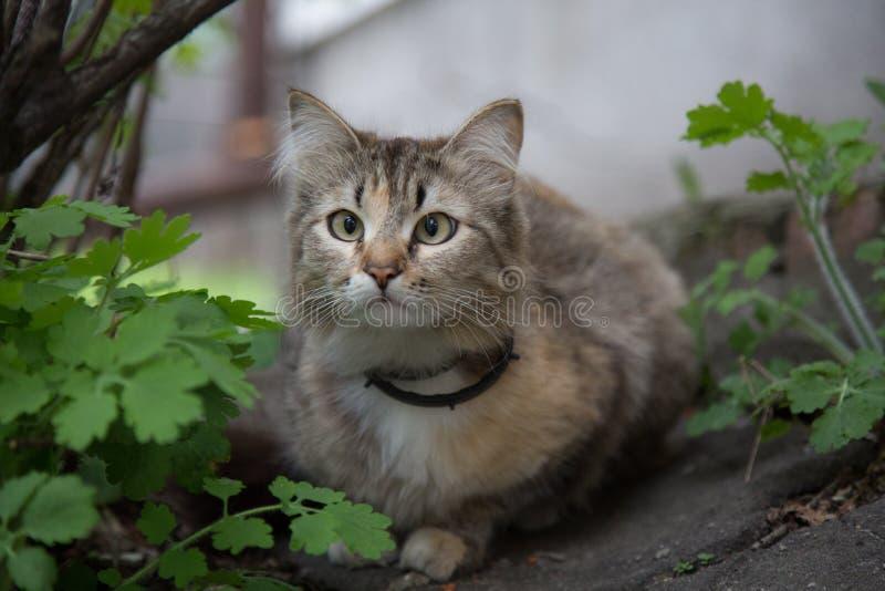 Vindögdhet synad kattgatacloseup royaltyfri foto