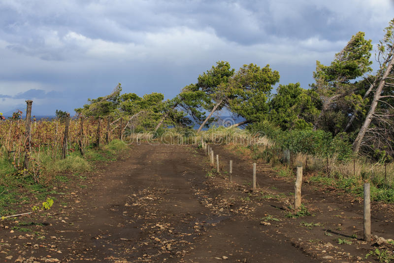 Vind-böjelse träd fotografering för bildbyråer