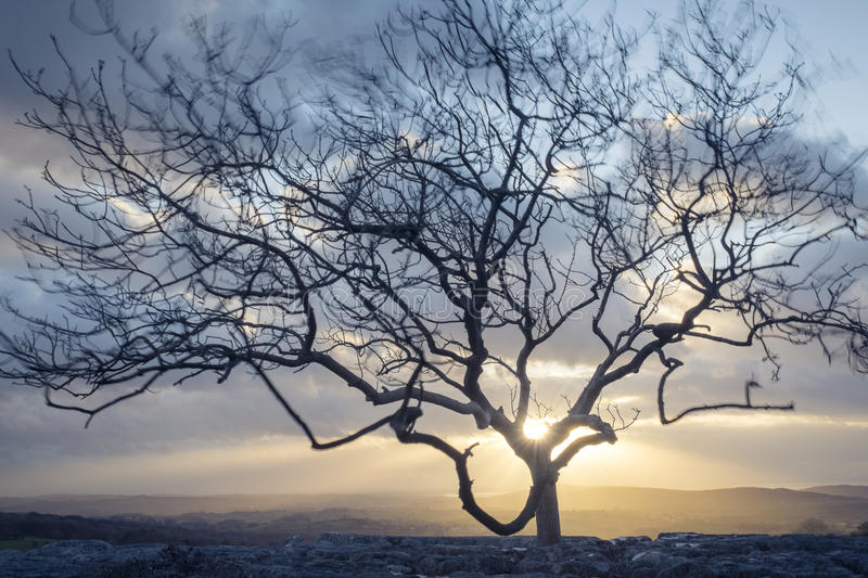 Vind-blåst träd royaltyfri bild