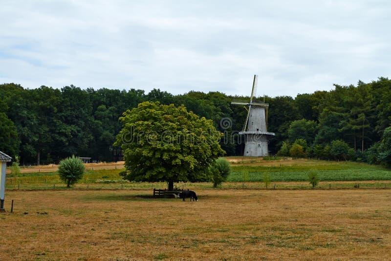 Vind maler på Arnhem Nederländerna Juli arkivbild